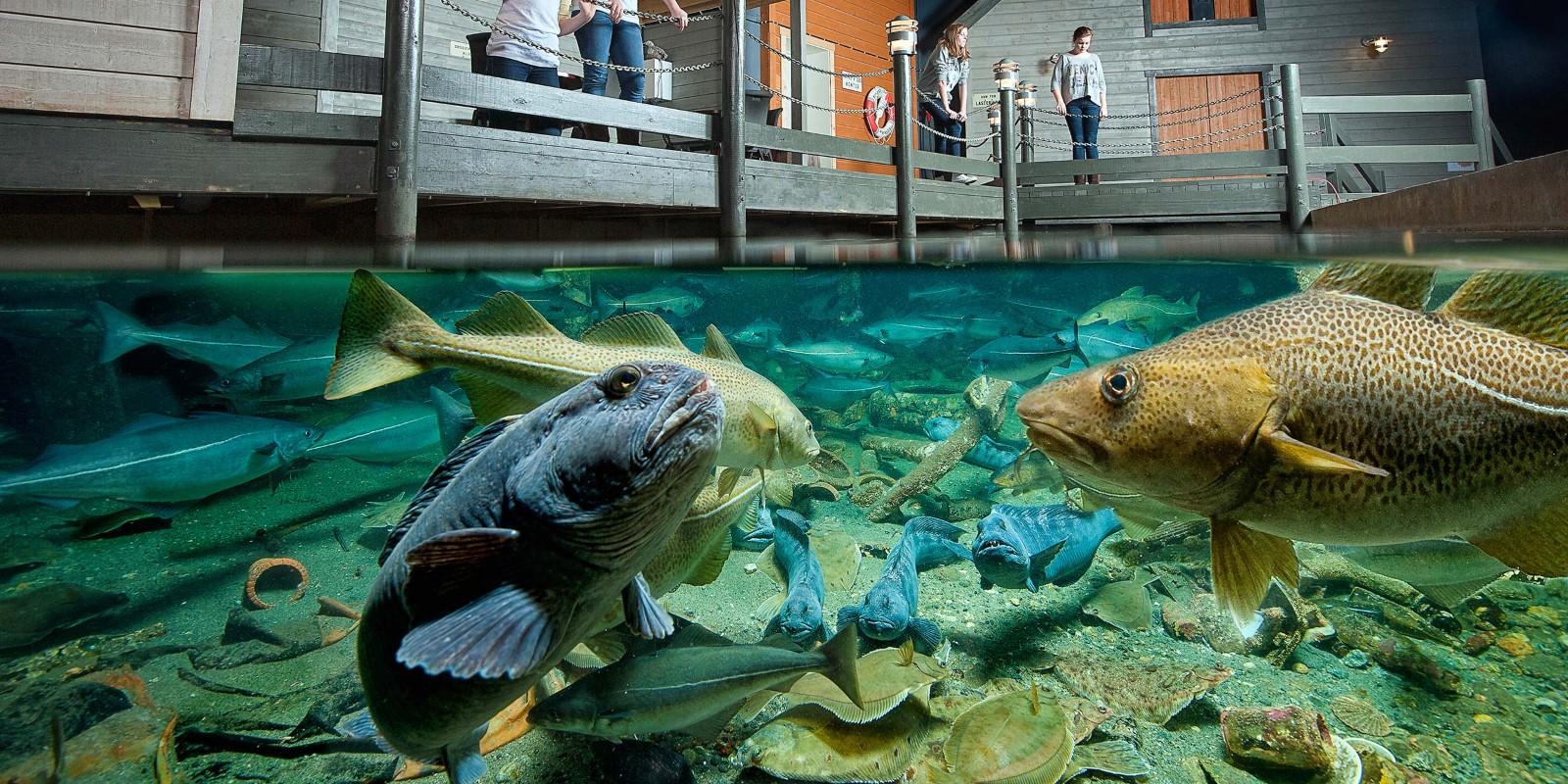 fisk atlant