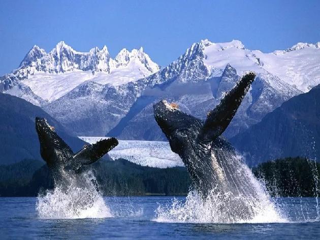 киты день 4 Uniktur