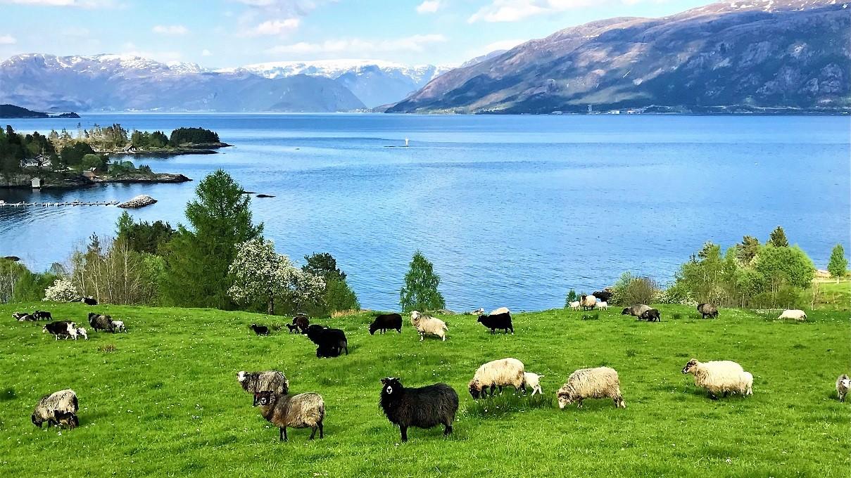 туры в Норвегию от Uniktur