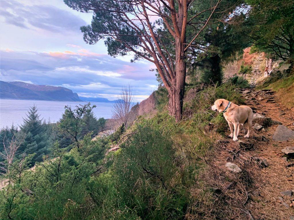 Лабрадор Лорд осматривает панорамные виды в туре с Uniktur